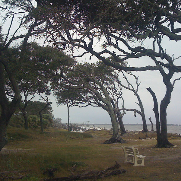 Live Oak Vista on Current Coastline