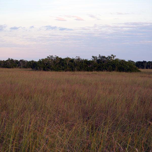 Sawgrass and tree islands Miami Dade County