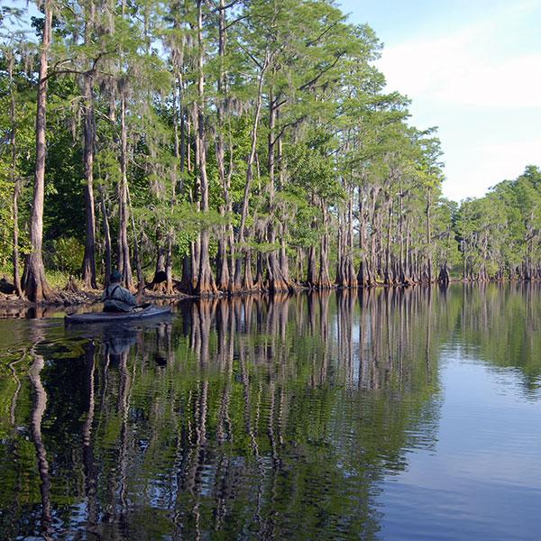 paddling Shingle Creek in Osceola County