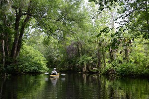 Little-Wekiva-River_sm